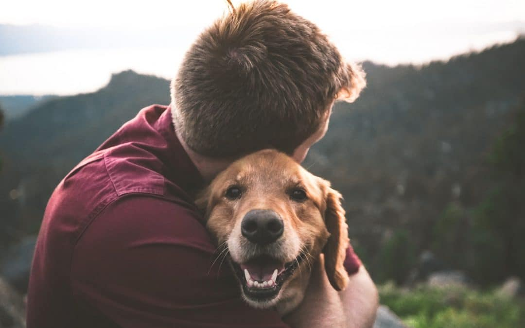 The Most Touching Stories of Humans and Their Pets
